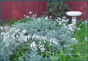 Corner Fence, Flowers, Bird Bath