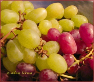 Grapes - Distinct and Similar