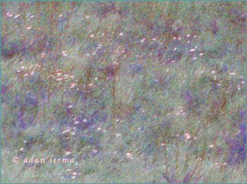 Field of Early Spring Flowers, Original Photography by Adan Lerma, With Saturation