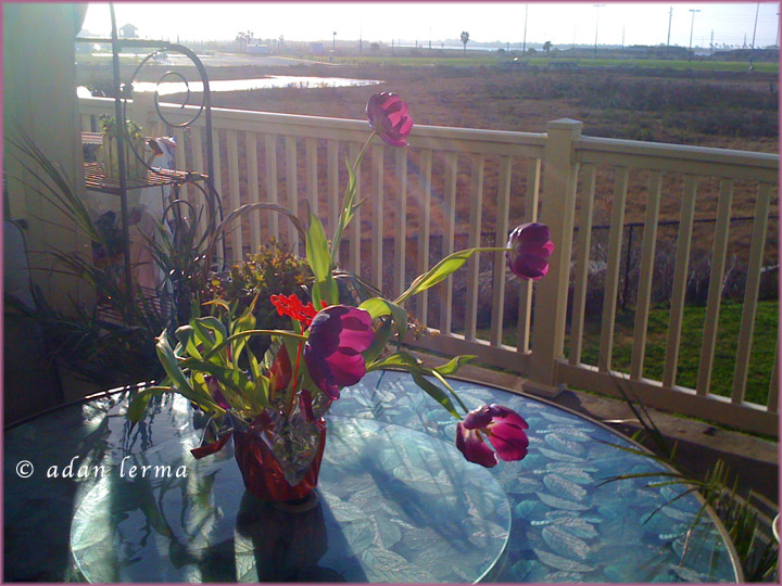 Flowers on Terrace, Galveston by the Bay