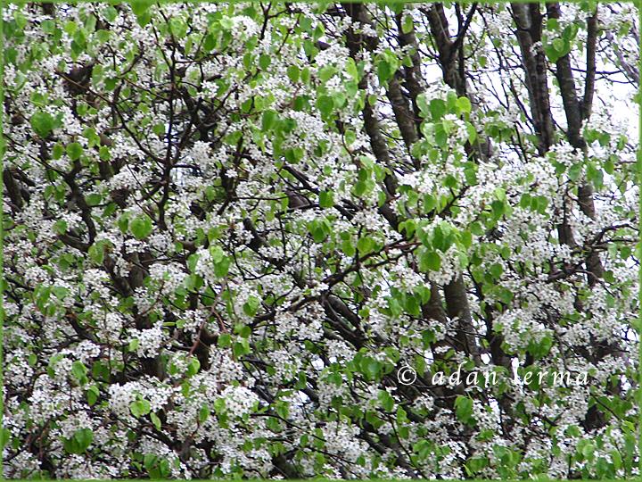 Spring Floral Header 040111