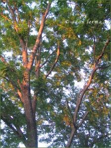 Light on the Trees