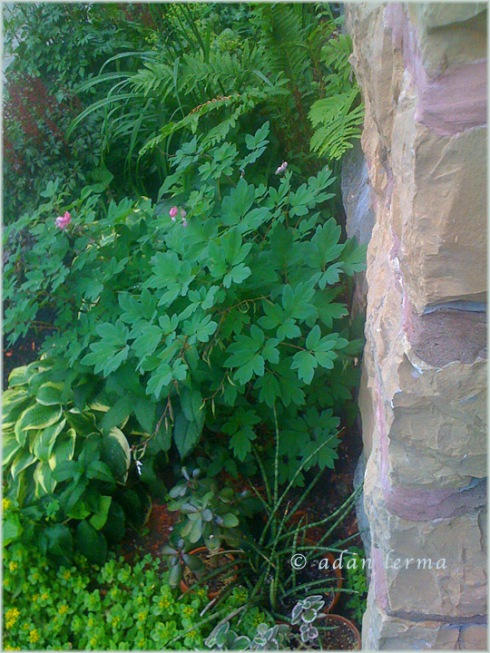 Vegetation Along Stone Wall
