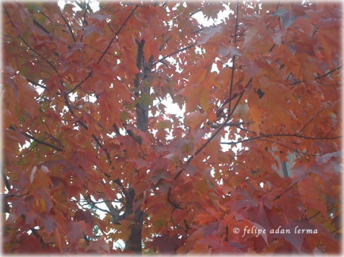 Autumn Leaves, Full Image for Header 112411