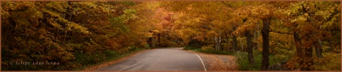 Road of Fall Colors Header