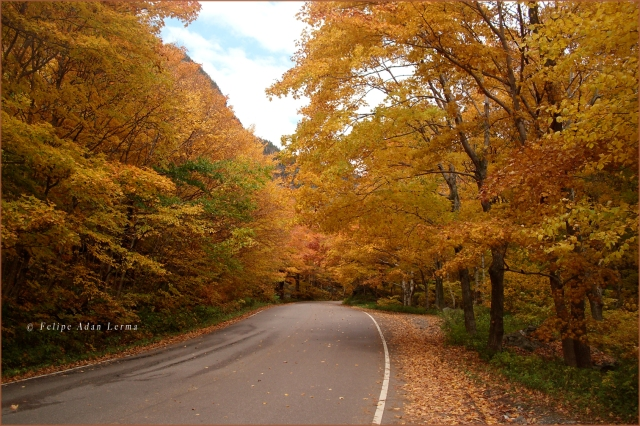 Road of Fall Colors Header Full Size