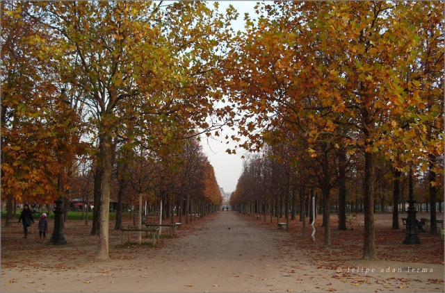 Between the Late Autumn Trees