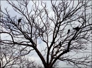 Birds in Winter Tree Photography © Felipe Adan Lerma