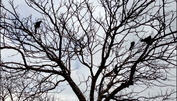 Birds in Winter Tree Photography © Felipe Adan Lerma
