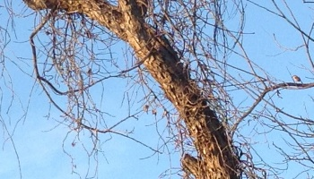 Bird in a Budding Tree