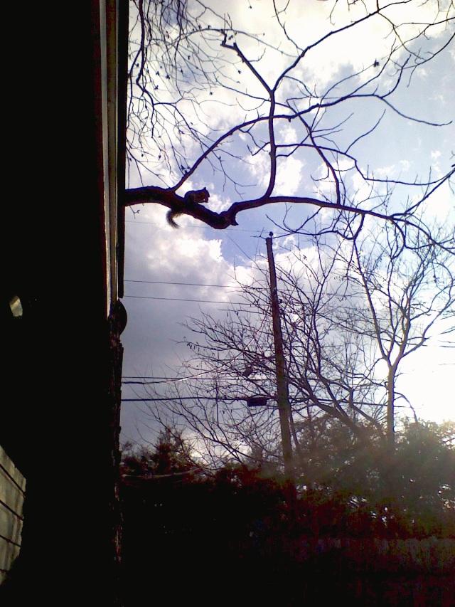 Squirrel in Tree - Photography Sheila Mae Lerma