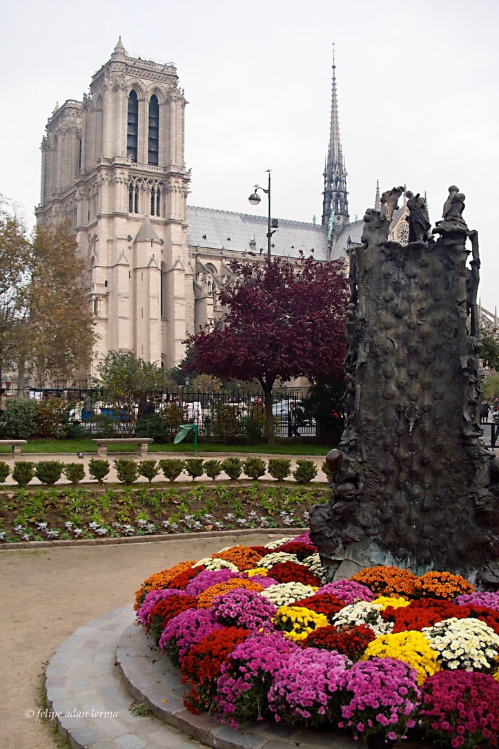 Mums and Notre Dame