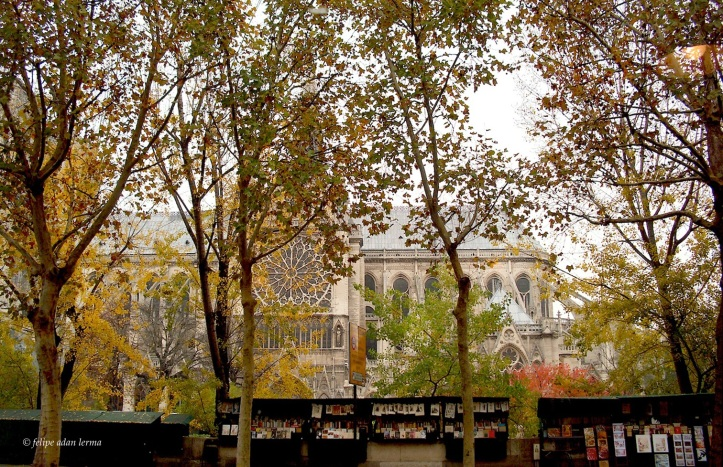 Notre Dame View from Comme Chai Toi