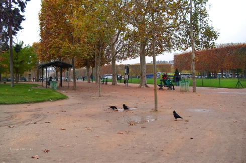 Birds Bathing on Eiffel Tower Grounds