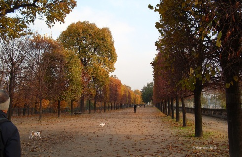 Fall Color Remnants, Southern Edge of the Tuileries
