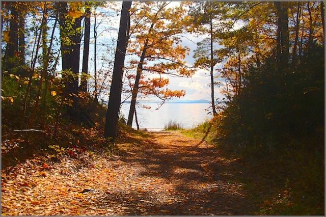 Leddy Park, Autumn © felipe adan lerma