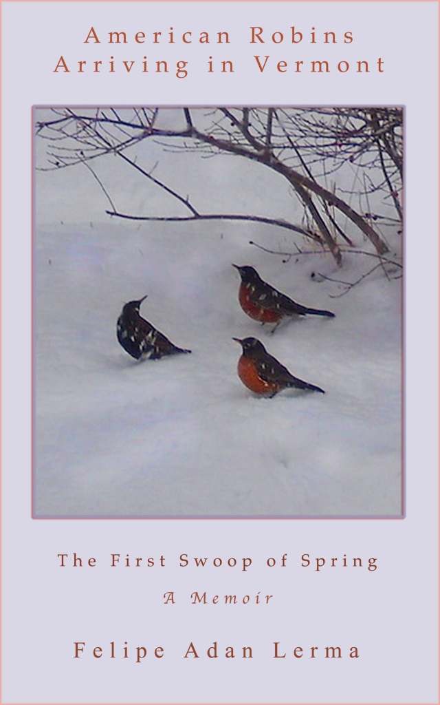 American Robins Arriving in Vermont med