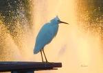 Birds & Fun at Butler Park Austin Birds 3 Detail Macro - @Felipe Adan Lerma All Rights Reserved
