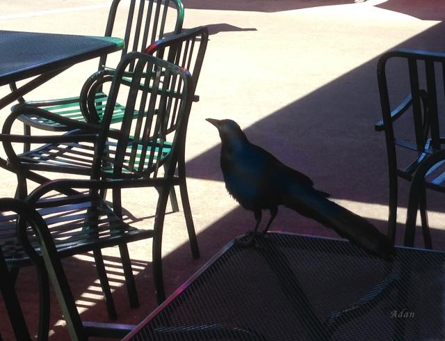 Black Bird At Central Market * ©Felipe Adan Lerma * All Rights Reserved