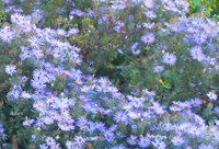 White Blue Cluster ©Felipe Adan Lerma; original photography; hi res version avail at Fine Art America https://fineartamerica.com/featured/white-blue-cluster-felipe-adan-lerma.html .
