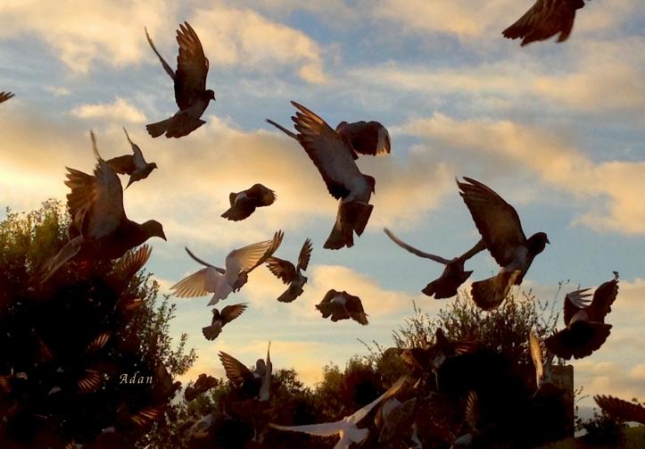 Birds & Fun at Butler Park ©Felipe Adan Lerma - https://fineartamerica.com/featured/birds-and-fun-at-butler-park-austin-birds-1-felipe-adan-lerma.html .