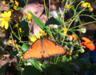 Spotted Treasure. Original butterfly photography via Felipe Adan Lerma; image seen at Fine Art America https://fineartamerica.com/featured/spotted-treasure-felipe-adan-lerma.html .
