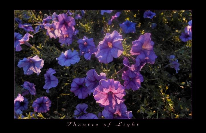 Theatre of Light Poster © Felipe Adan Lerma - part of my Floral Collection at Fine Art America https://fineartamerica.com/profiles/felipeadan-lerma.html?tab=artworkgalleries&artworkgalleryid=642804 .