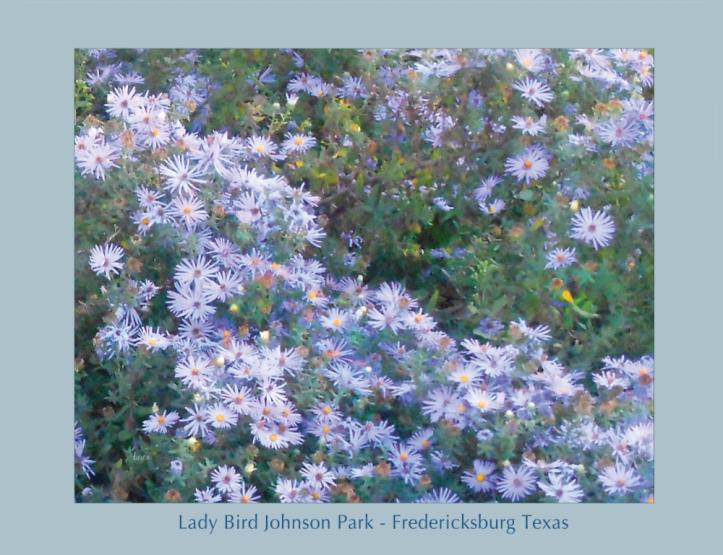 White Blue Cluster Poster - Fredericksburg Texas © Felipe Adan Lerma. Fine Art America - https://fineartamerica.com/featured/white-blue-cluster-poster-felipe-adan-lerma.html?newartwork=true