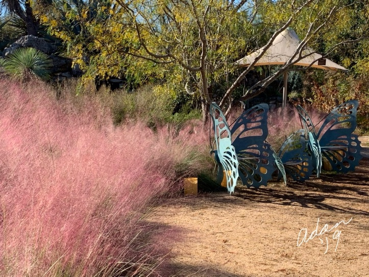 At Lady Bird Johnson Wildflower Center Nov 24'19 d
