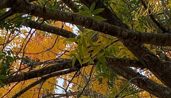 Fall Colors Austin Nov 22'19 c ©Felipe Adan Lerma