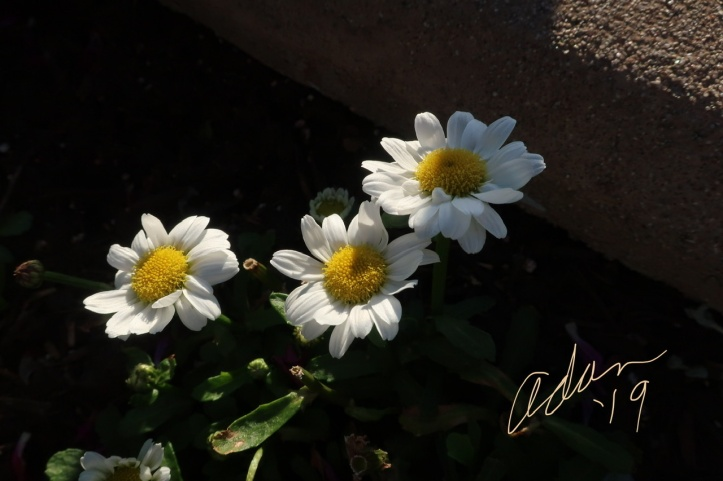 Adan's Floral Photography My Yesterday in Pictures Nov 26'19 g