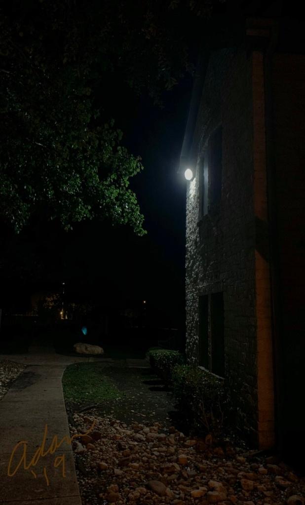 Evening Walk Nov '19 ©Felipe Adan Lerma