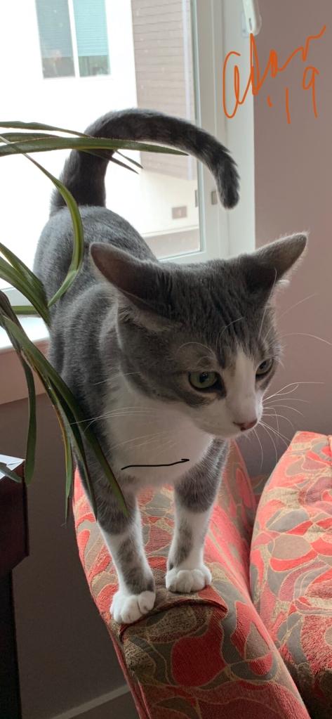 Thanksgiving Kitty 2019 😊©Felipe Adan Lerma