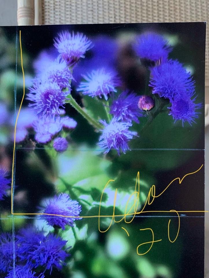 Square Crop of Dorset Street Vermont Community Gardens Violet Blooms Vertical ©Felipe Adan Lerma