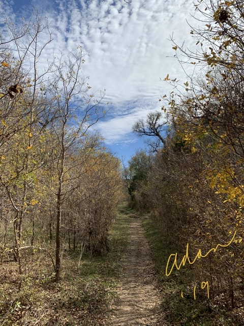 Mid-day Autumn Path Walk South Austin Nov 25'19 ©Felipe Adan Lerma