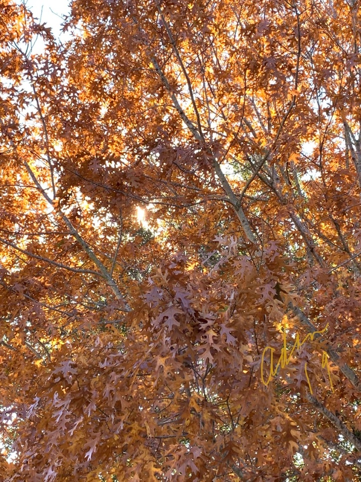 Autumn Colors Austin Nov 23'19 Orange Brown Leaves ©Felipe Adan Lerma