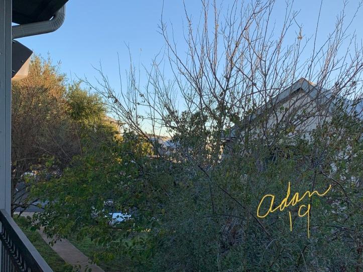 Daybreak Sunshine Austin Nov'19 ©Felipe Adan Lerma