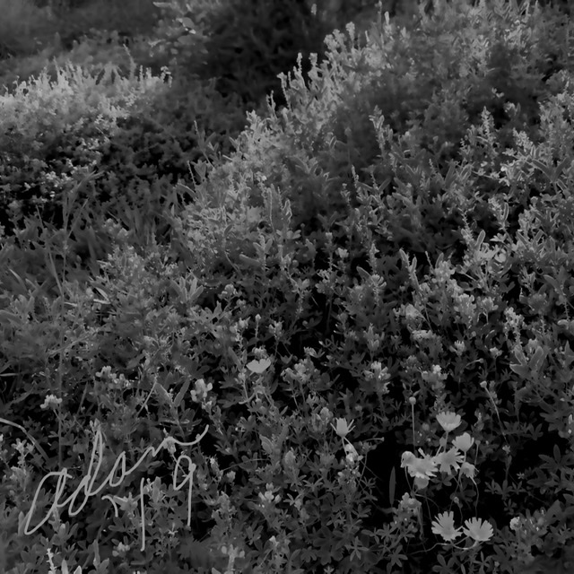Ridges of Light squared, bw values 12.21.19 ©Felipe Adan Lerma