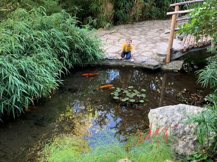 Detour at Zilker Botanical Garden 12.06.19 Max ©Felipe Adan Lerma