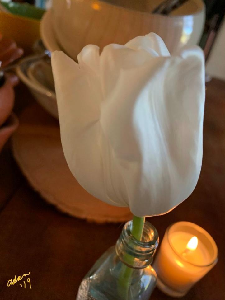 Live White Tulip at Christmas Dinner 2019