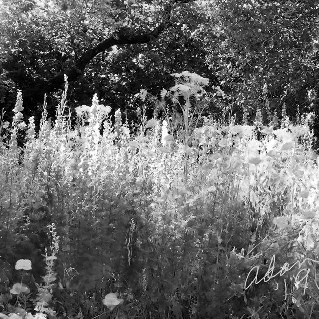 Floral Ridge squared, bw values 12.21.19 ©Felipe Adan Lerma