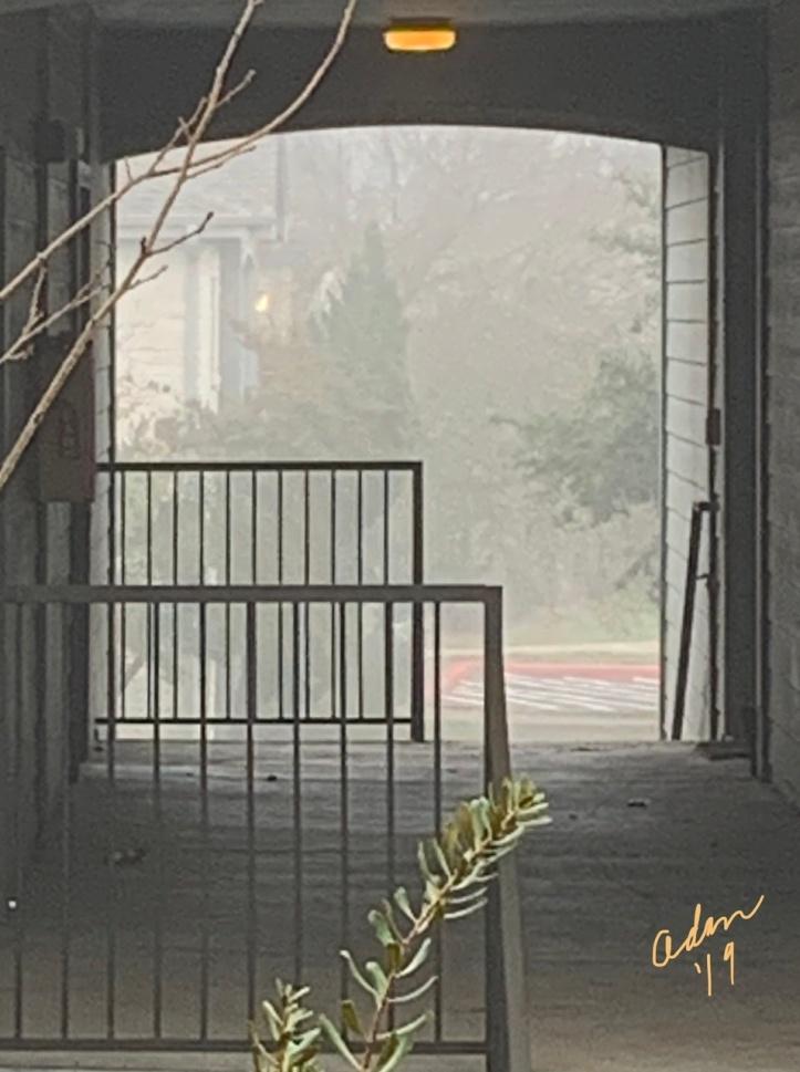 Morning Fog Breezeway 12.15.19 ©Felipe Adan Lerma