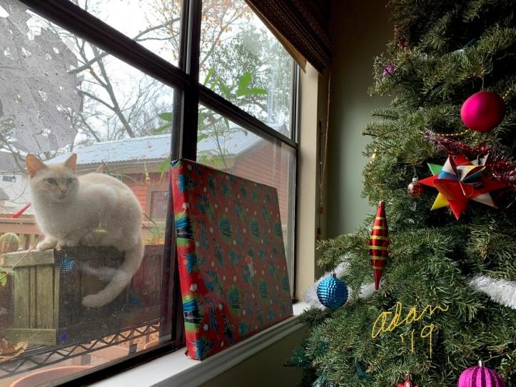 Christmas Day Gifts, Inside & Out 😊 2019 ©Felipe Adan Lerma