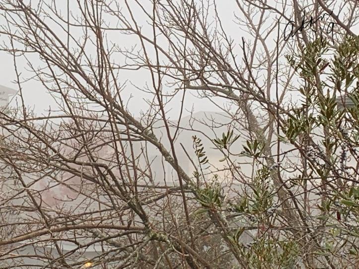 Morning Fog Bare Trees 12.15.19 ©Felipe Adan Lerma