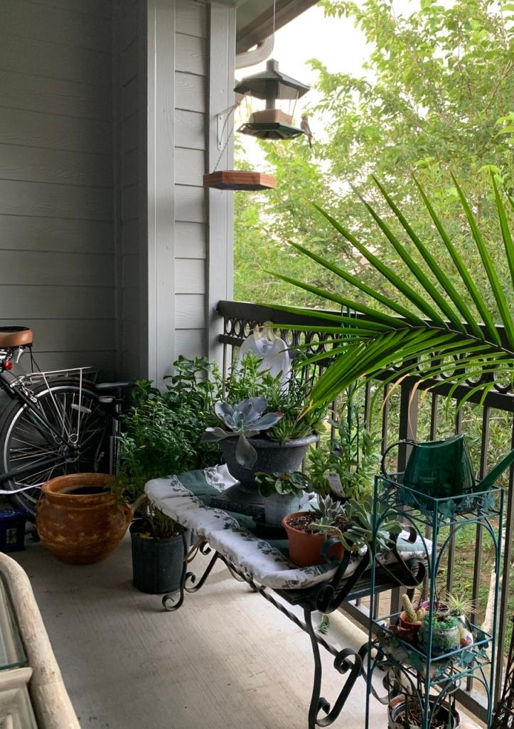 Gardening our Balcony, Bird Summer 2020 ©Felipe Adan Lerma