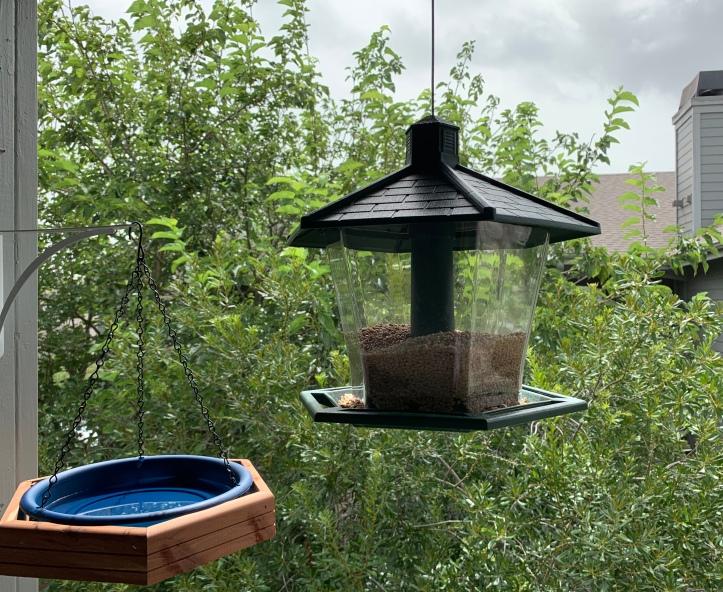 Gardening our Balcony Summer 2020 ©Felipe Adan Lerma