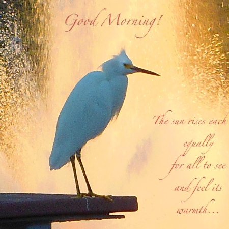 Good Morning Bird Poster ©Felipe Adan Lerma https://fineartamerica.com/featured/birds-and-fun-at-butler-park-austin-birds-3-detail-macro-poster-good-morning-felipe-adan-lerma.html
