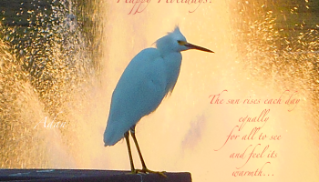 Happy Holidays Bird Poster - Variation of Good Morning Bird Poster ©Felipe Adan Lerma https://felipeadan-lerma.pixels.com/featured/birds-and-fun-at-butler-park-austin-birds-3-detail-macro-poster-good-morning-felipe-adan-lerma.html