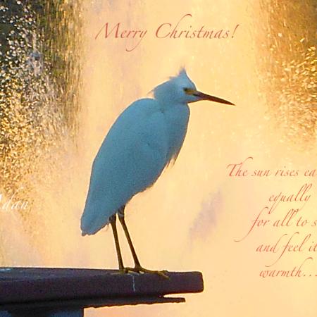 Merry Christmas Bird Poster - Variation of Good Morning Bird Poster ©Felipe Adan Lerma https://felipeadan-lerma.pixels.com/featured/birds-and-fun-at-butler-park-austin-birds-3-detail-macro-poster-good-morning-felipe-adan-lerma.html