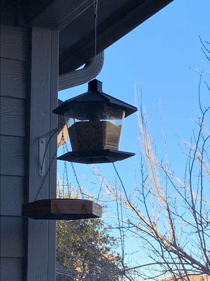 Newly filled bird feeder and bath @FelipeAdanLerma Austin winter storm Feb 2021
